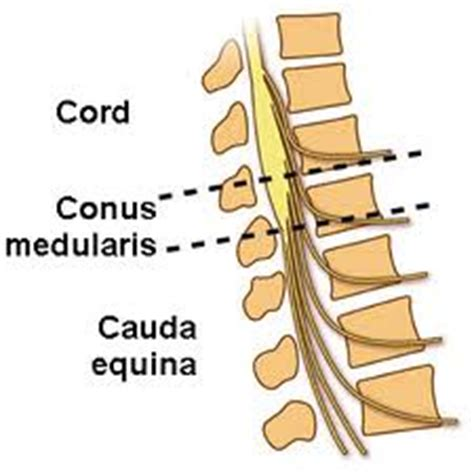 Essay on spinal cord